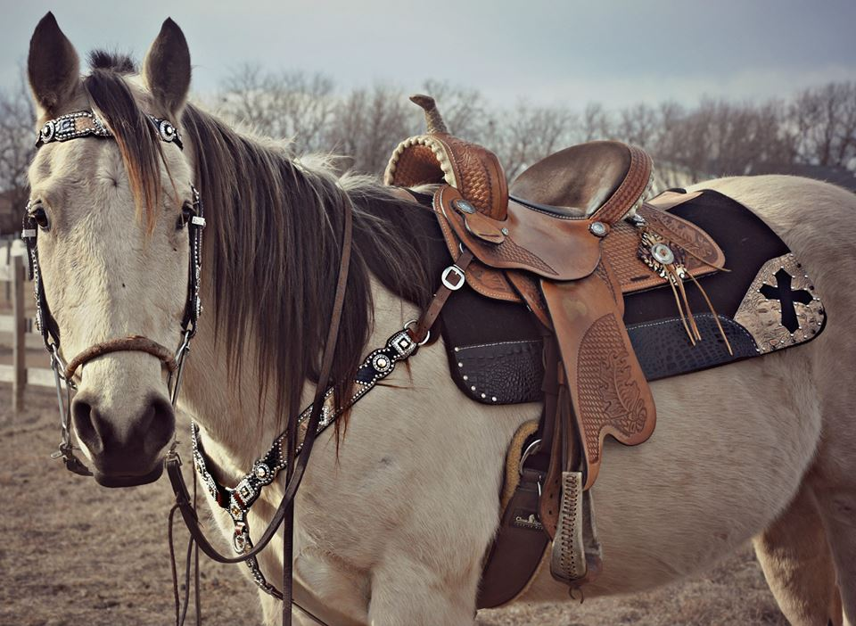 Lantern Lane Creations has specialized in custom tack that is durable,  functional and affordable for over 25 years.